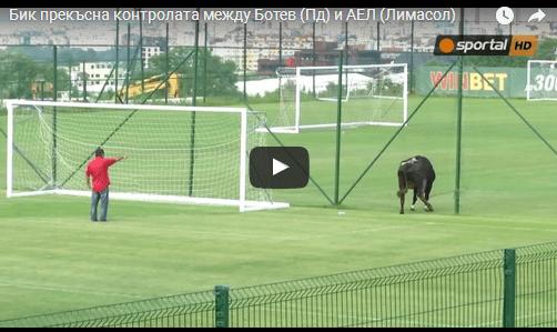 Животинско царство на фудбалски терен во Бугарија