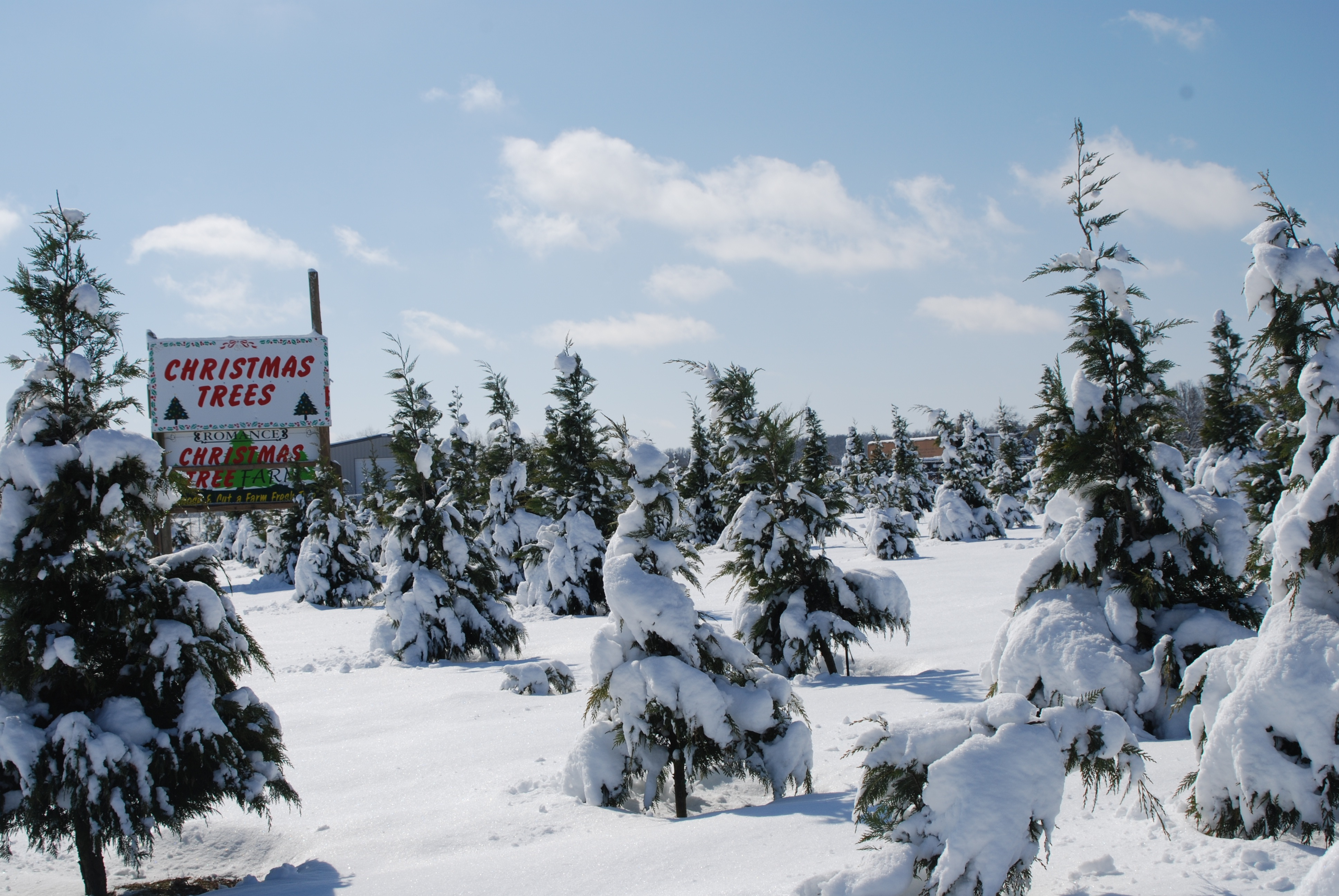 Christmas Tree Farms Only In Arkansas