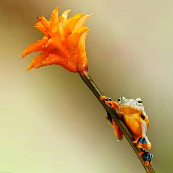 colourful photos of frogs
