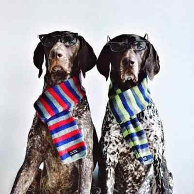 dogs style3