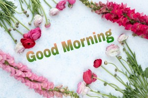 gd mng Image