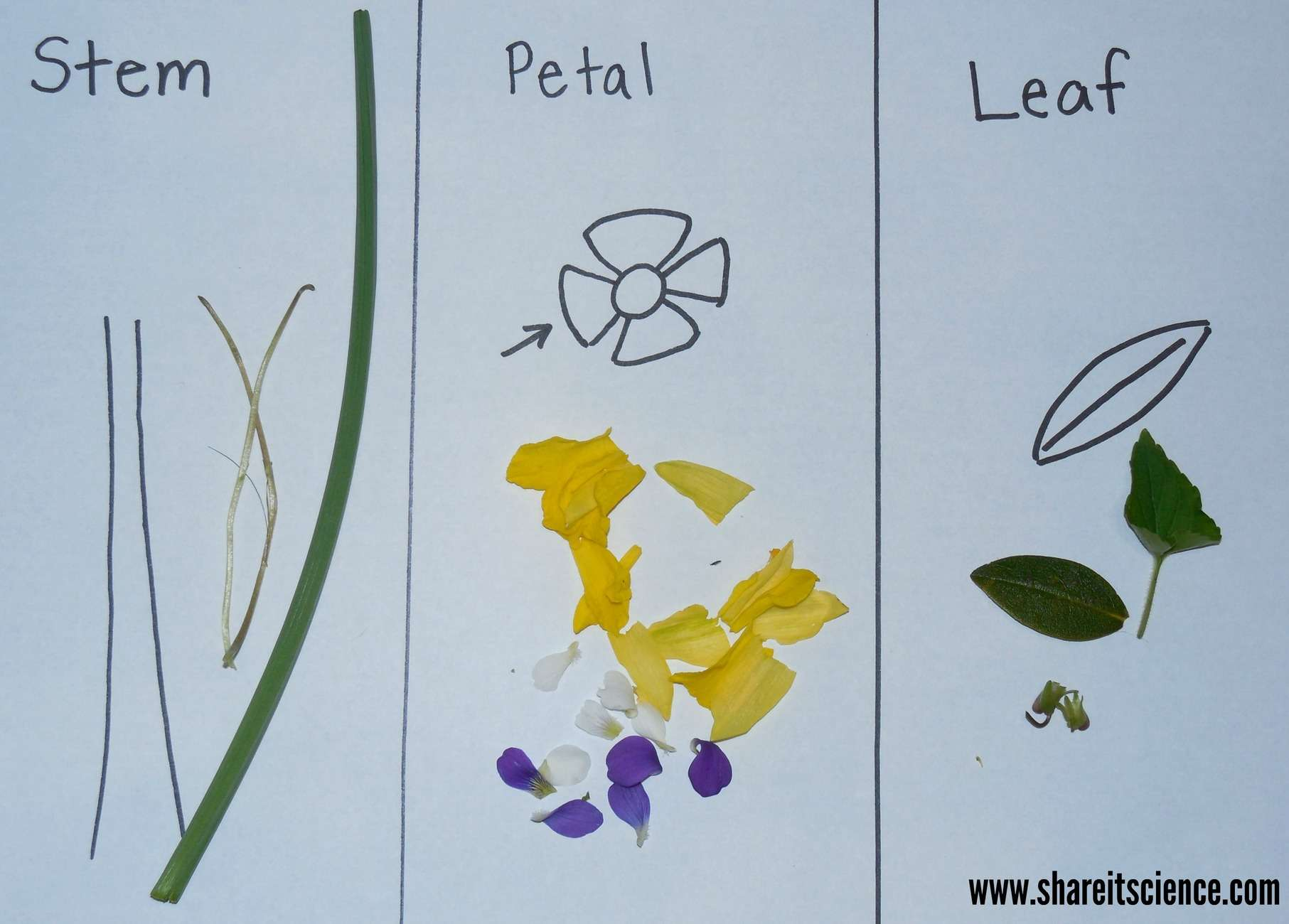 Exploring Flowers Activities From Preschool To High