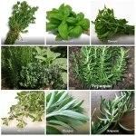"""<span class=""""title"""">Ароматные травы и их польза для здоровья</span>"""