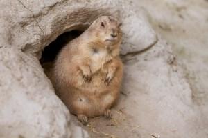 How Do Animals Hibernate? – (Types of Hibernation   in Animals EXPLAINED)