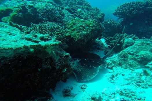 Seychelles animaux marins