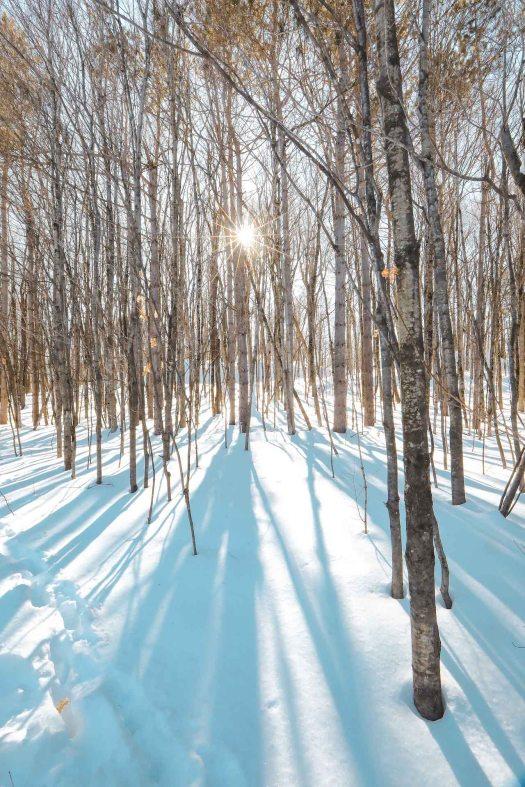 Près du sentier de la sucrerie dans le parc de la Gatineau dans l'Outaouais au Québec