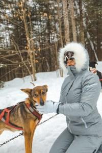 Un chien de traîneau dans l'Outaouais