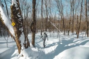 Parc National du Mont Tremblant sous la neige en hiver