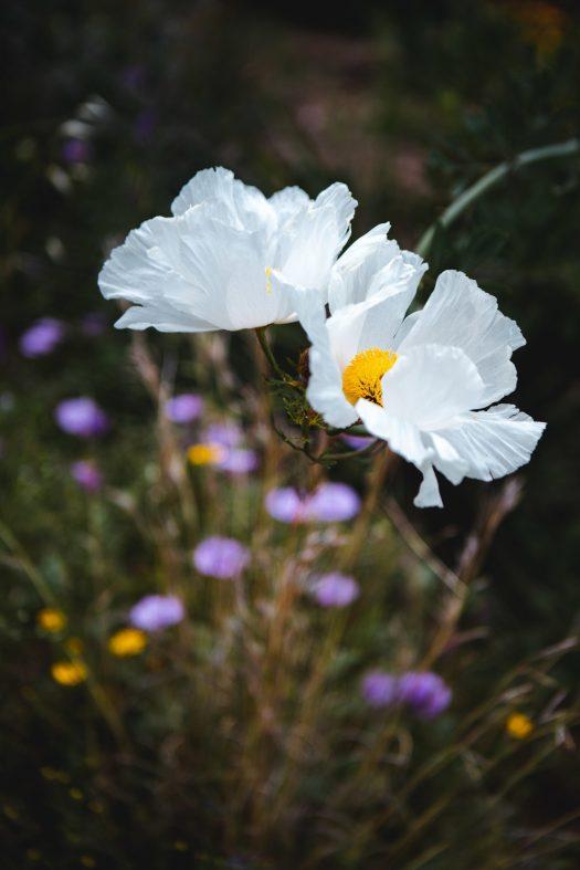 jardin du rayol