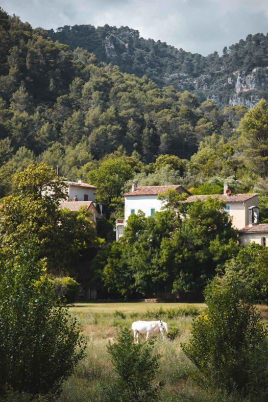 vigne à vélo Dracénie hameau de Rebouillon