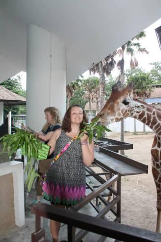 kelc giraffe