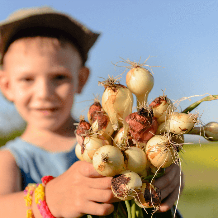 A child holding onions from the ground.