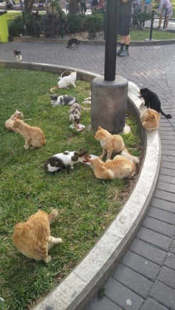 Kennedy Park is the main park in Miraflores and is overrun with stray cats....which I did not appreciate.