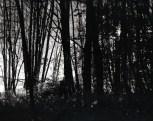 """Keijun syntymä, Bird of a Sprite"" 2010, B&W photograph, pigment print, 100x130cm, edition 1/5 ©Veli Granö"