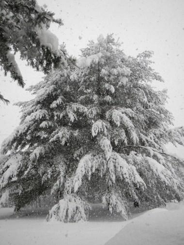 heavy wet snow
