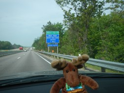 NH Moose hits another new state too