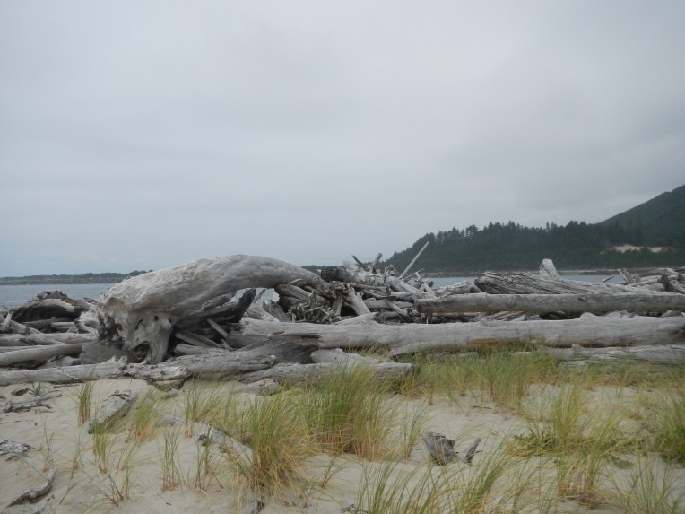 Driftwood? How about drift-trees?