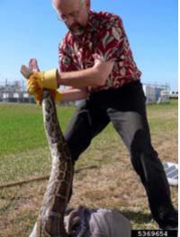 SnakeWrestling