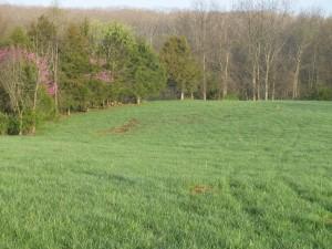 Spring Grass Green Pastures Farm