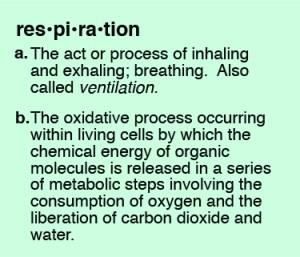 respiration definition