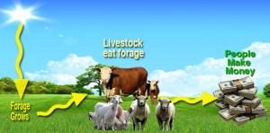 Turning Sunlight Into Money Via Livestock