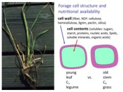 F7 young old cell wall