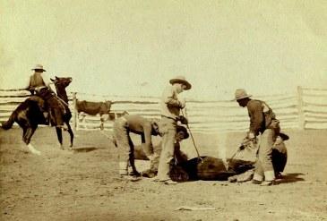 Cattle_branding_Grabill_1888