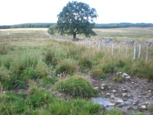 Rough_Pasture_North_of_Tullich_-_geograph.org.uk_-_924471