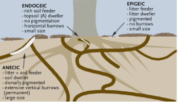 Epigeic, endogeic, and anecic. Useful for naming  worms and for playing Scrabble.