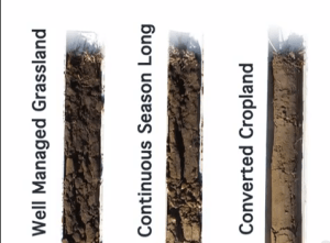 These soil cores show the decreasing ability of soil to absorb moisture as above ground management changes.