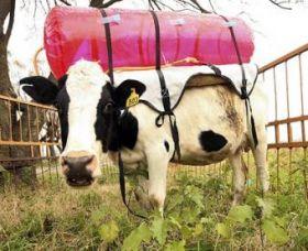 1-cowbackpacks