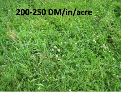 200 lbs DM:Acre