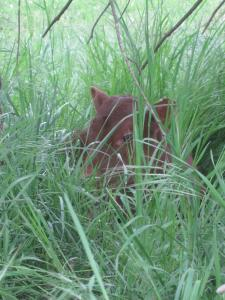 Calf napping in grass