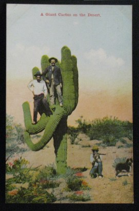 Here's something Rachel and I will NOT be doing when she visits me in Tucson.  How DID they get up into this cactus without getting filled with spines?!