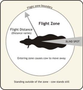 flight_zone(2)