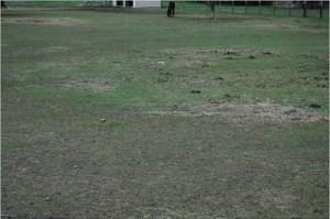 pastureclosegrazing1