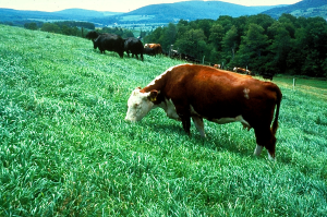 Our pastures in the late 1980s.