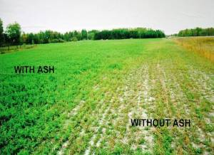 This is an example of a wood ash application project in Minnesota.  Learn more by clicking on the picture.