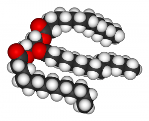 A triglyceride molecule, the main constituent of lard.
