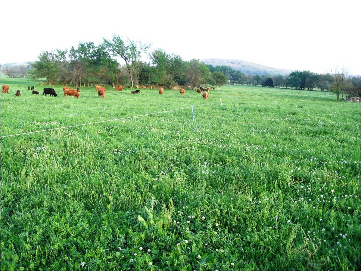 Pasture Management Perennial Or Annual Forages On Pasture