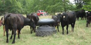 nifty_ideas_for_grazers_2