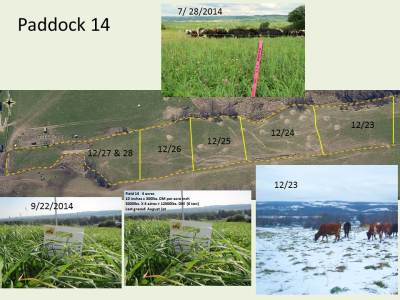 Here's paddock 14 on the ground and it's history in 2014.  See the kind of forage I grew and what it looks like being grazed as stockpile. And click to zoom in for a better view.