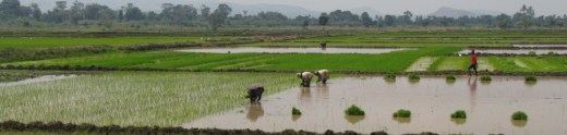 rice-culture-lower-Moshi-TZ-Weil-1024x244