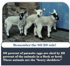 80-20 Rule on Shedders