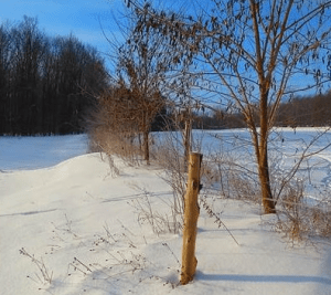 Snow collection in the weeds and trees