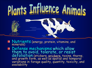 Plants Influence Animals