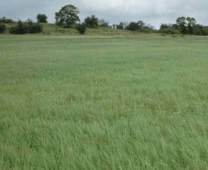 Well-established hay fields hold manure in place better than other cropped ground.