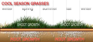 Here's the growth cycle for cool season grasses.
