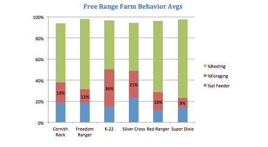 Chicken Breed Foraging Behavior