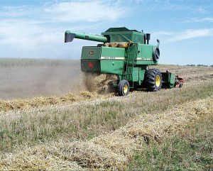 A combine moves through a field of triticale, harvesting grain and leaving swaths for the cows to feed on in the winter in Mandan, North Dakota. Photo courtesy of the USDA ARS.